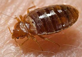 Bed Bug Residue http://www.allisonpest.com/blog/2011/02/04/why-hiring-a-trusted-new-jersey-pest-control-expert-is-important/