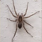 What to Do About NJ Spiders? Should You Treat for Them?