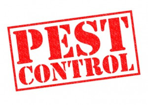 Get Allison Pest Control on Your Side