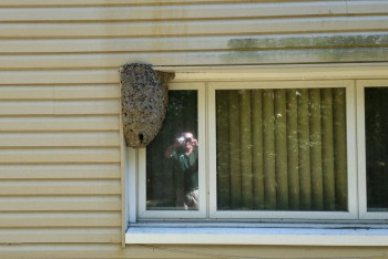 Afraid a Wasp Infestation May Be Occurring? We Can Help!