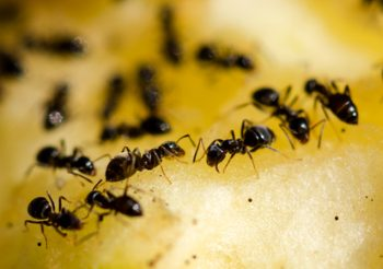 Let Us Help You Rid Your Residence of Ants!