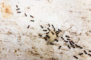 Do You Hate Ants So Much You'd Burn Down Your Home? One Man Did - by Accident.