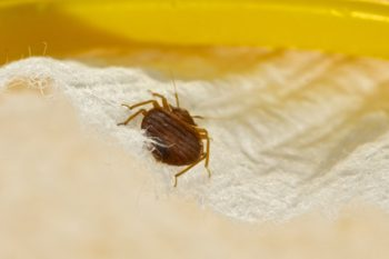 Could this be an answer to bed bug control problems?