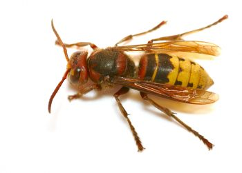 How to Prevent Bee and Wasp Stings