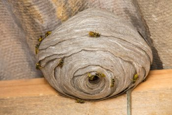 Wasp's Pack a Nasty Punch... Let Us Deal With Them so You Don't Have to.