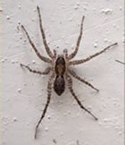 Get Help with Spiders in Your NJ Home or Business from Allison Pest Control!