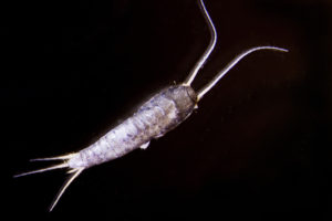 Have You Seen Me? The Silverfish.