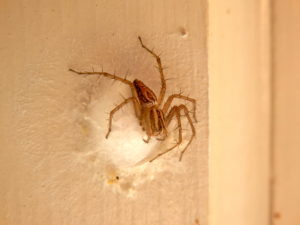 Some Spiders May be Beneficial and Others Problems.
