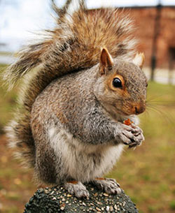 Allison Pest Control gets rid of squirrels.